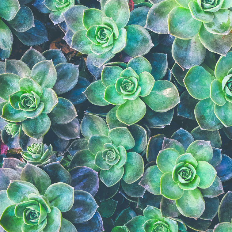 Succulents-cropped.jpg